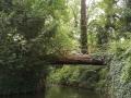 most z jednoho kusu stromu